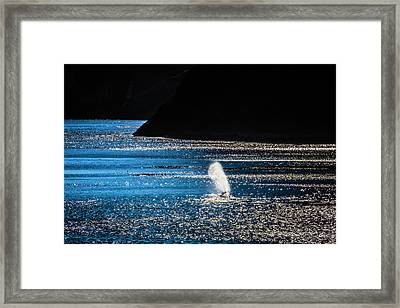 Gray Whale Mist Framed Print by Garry Gay