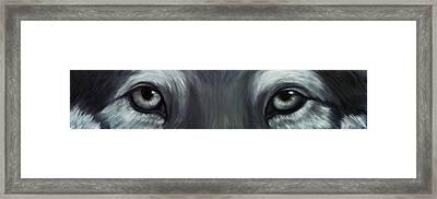 Gray Wolf Eyes Framed Print