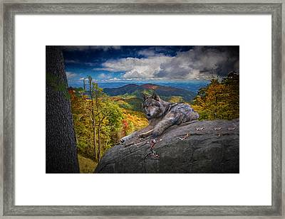 Gray Wolf In Autumn Framed Print