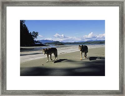 Gray Wolves On Beach Framed Print