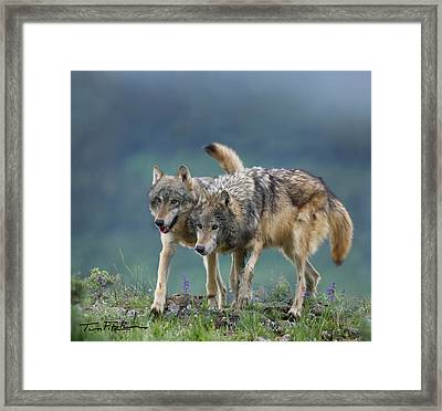 Gray Wolves Framed Print