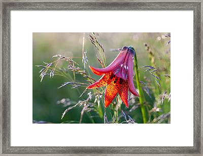 Gray's Lily Roan Mountain Highlands Framed Print by Mark VanDyke