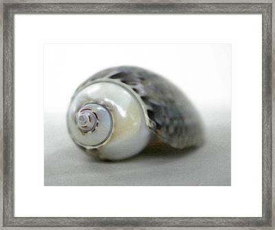 Graysnail Framed Print by Mary Haber