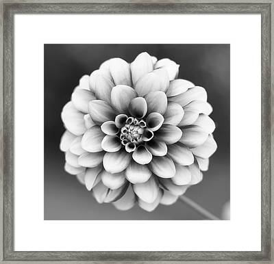 Graytones Flower Framed Print by Photography På