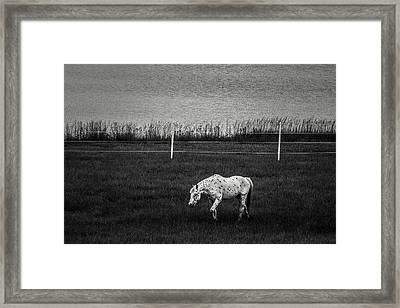 Graze Framed Print by Off The Beaten Path Photography - Andrew Alexander