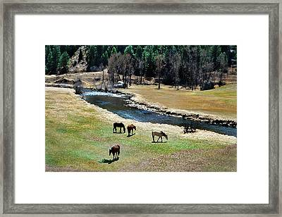 Grazing 2 Framed Print by Angelina Vick