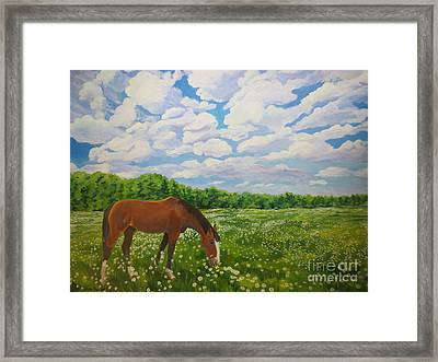 Grazing Among The Daisies Framed Print by Stella Sherman
