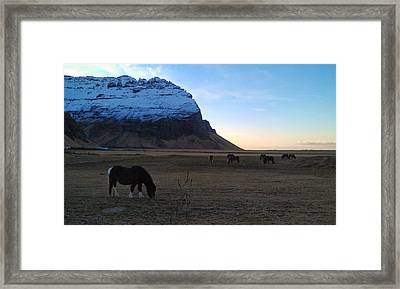 Grazing At Dawn Framed Print