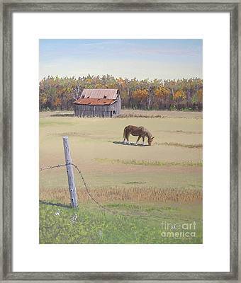 Grazing At Peace Framed Print by Norm Starks