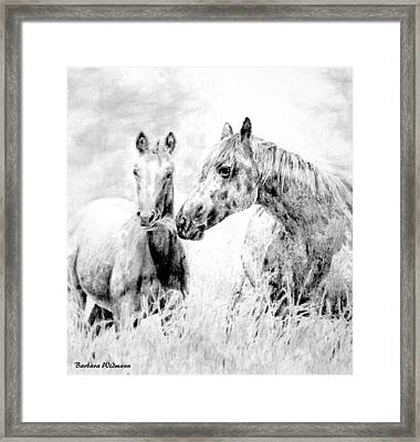 Grazing Framed Print by Barbara Widmann