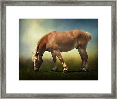 Grazing Belgian Framed Print by David and Carol Kelly