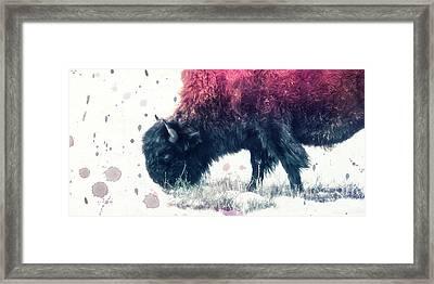 Grazing Bison Framed Print