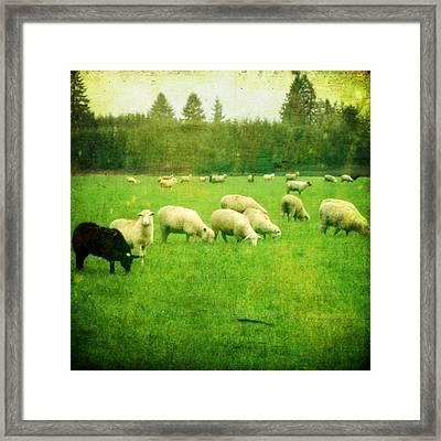 Grazing Framed Print by Cathie Tyler