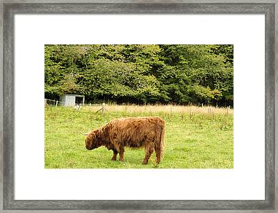 Framed Print featuring the photograph Grazing by Christi Kraft