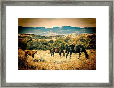 Grazing Framed Print by Fred Larson