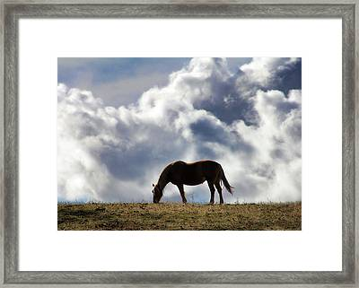 Grazing Horse Framed Print by Stephanie Laird