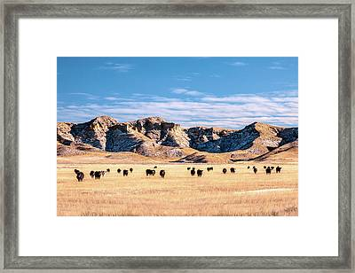Grazing In The Badlands Framed Print by Todd Klassy