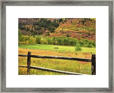 Grazing In The Grass Framed Print by Jim Chamberlain
