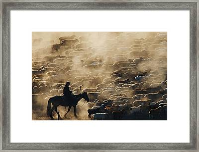 Grazing In The Morning Framed Print by Adam Chen
