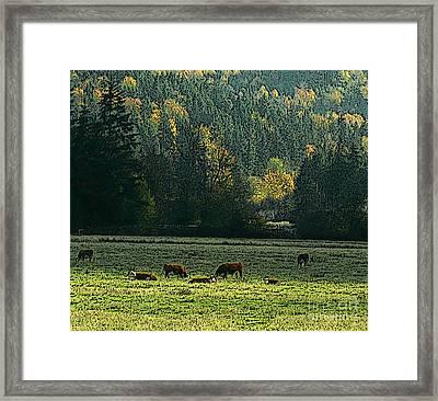 Grazing In The Skokomish Valley Framed Print by Terri Thompson
