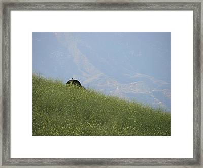 Grazing Framed Print by Liz Vernand