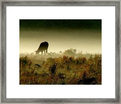 Grazing On A Misty Morning Framed Print by Kimberly Camacho