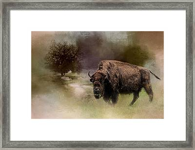 Grazing On Tuesday Buffalo Art Framed Print