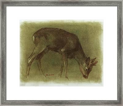 Grazing Roe Deer Oil Painting Framed Print