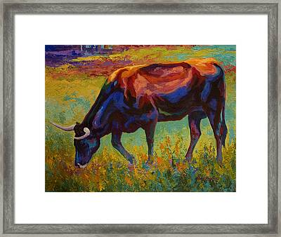 Grazing Texas Longhorn Framed Print by Marion Rose