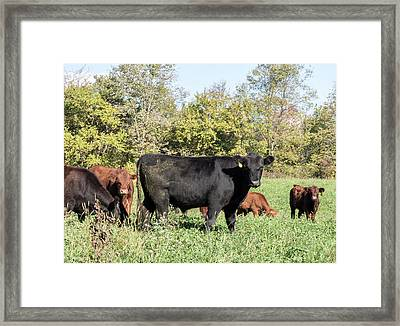 Grazing Framed Print by William Morris