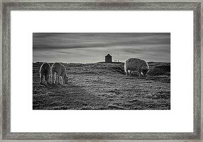 Grazing With The Family Framed Print by Chris Fletcher