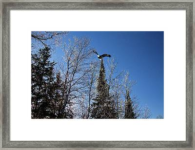 Great American Bald Eagle And Ice Framed Print by Gary Smith