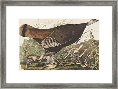 Great American Hen Framed Print by John James Audubon