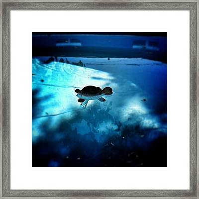 Great A'tuin Framed Print