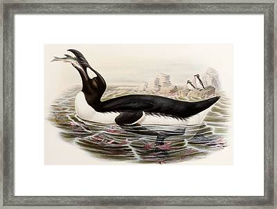 Great Auk Framed Print by John Gould