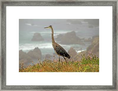 Framed Print featuring the photograph Great Blue Along The P C H by Donna Kennedy