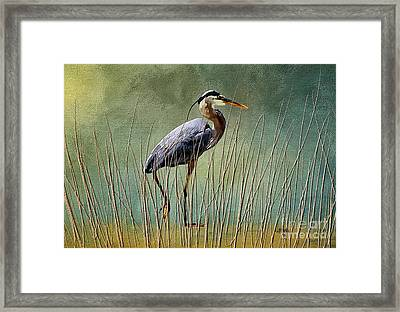 Great Blue At The Beach Framed Print