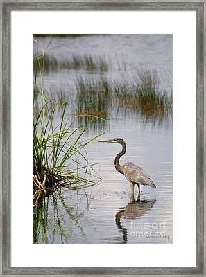 Framed Print featuring the photograph Great Blue by Dodie Ulery