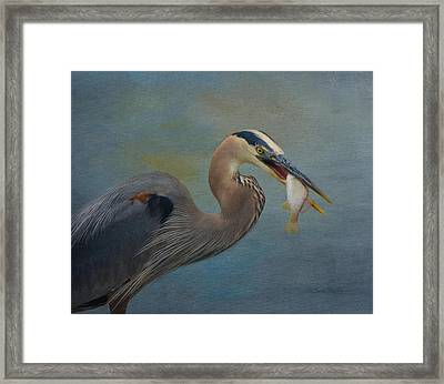 Great Blue Heron And Catch Framed Print