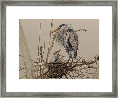 Great Blue Heron And Chicks Framed Print by Laurie Tietjen