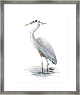 Great Blue Heron Framed Print by Anna Bronwyn Foley