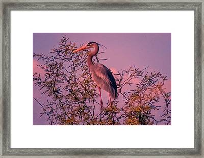 Great Blue Heron - Artistic 6 Framed Print