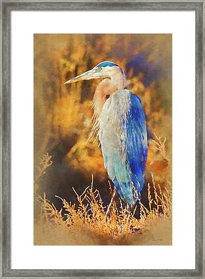 Framed Print featuring the photograph Great Blue Heron by Bellesouth Studio