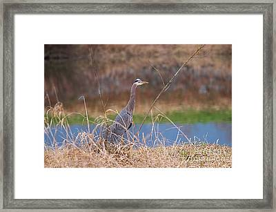 Framed Print featuring the photograph Great Blue Heron By The River by Sharon Talson