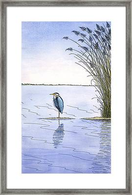 Great Blue Heron Framed Print by Charles Harden