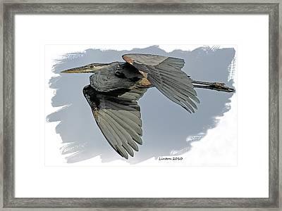 Great Blue Heron Flight Framed Print