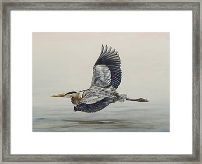 Great Blue Heron Flying Framed Print by Laurie Tietjen