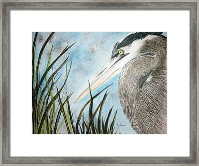 Great Blue Heron Framed Print by Georgia Johnson
