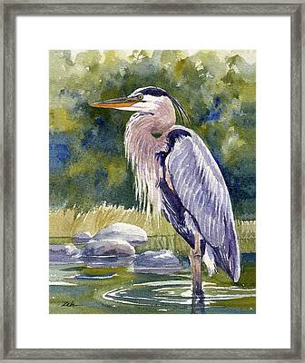 Great Blue Heron In A Stream Framed Print