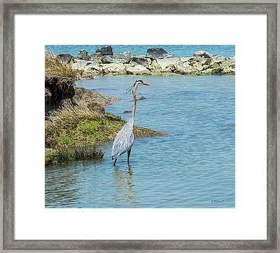 Great Blue Heron In Cove Framed Print
